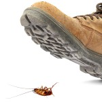 Boot on Roach